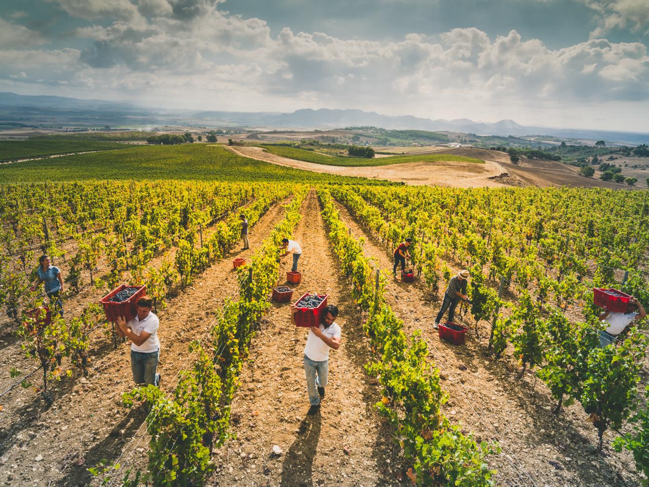 Wine and taste tour, tra le cantine Aru, Su Entu, Sardus Pater e Argiolas
