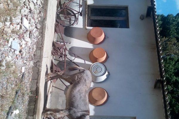 Casa antichi mestieri (4)